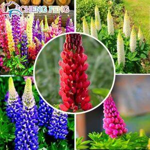 SVI 100pcs mixtes Graines Russell lupin graines Lupinus Polyphyllus Fleur Bonsai Plantes de jardin Prix de gros - Publicité