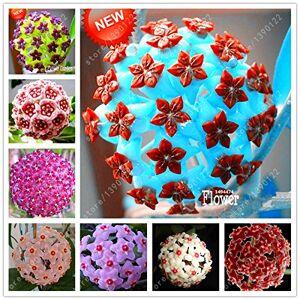 SVI 20 pcs/sac de graines de hoya, plante hoya, graines balle d'orchidées, rares graines de fleurs bonsa, pot de croissance naturel pour la maison jardin plantation - Publicité