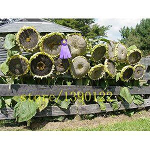 SVI 20 pcs géants graines de tournesol grosses graines de fleurs de tournesol noir russe graines géantes de maison jardin de tournesol - Publicité