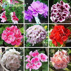 SVI Promotion! 20 Pcs Géranium Vivace Semences Semences Graines de fleurs Pelargonium peltatum pour chambres Indoor 18 Couleurs disponibles - Publicité