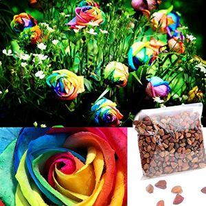 Ncient Graines Ncient 500pcs Graines Semences de Roses Multicolore Couleur Arc-en-ciel Graines Fleurs  Planter Plante RareJardin Balcon - Publicité