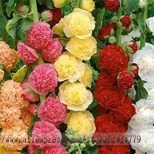 SVI graines trémire rares bonsa Althaea rosea graines de fleurs. Maison & Jardin fleurs en plein air, 100pcs / graines sac rose trémire de couleur mixte - Publicité