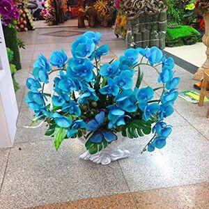 SVI Rare orchidée! Graines Papillon 10pcs Bonsai Balcon Fleur d'orchidée Phalaenopsis ciel bleu bricolage jardin - Publicité
