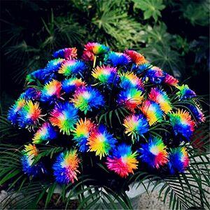 SVI 50 Graines de Rainbow Chrysanthme fleur couleur nouvelle arrivée rare bricolage jardin fleur plante - Publicité