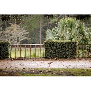 Leowefowa 3x2m Vinyle Printemps Toile de Fond Photo Clture extérieure Palmiers luxuriants Champ d'herbe Chemin Feuilles Fond De Studio Photo Portrait Photographie Props Photobooth - Publicité