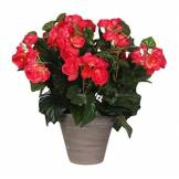 MICA Decorations 947106 Fleurs, Begonia, Rose