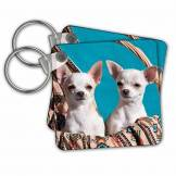 3dRose Chihuahua Puppies Pose in a Basket, Mr - Key Chains, 2.25 by 2.25-inch, Set of 2 Porte-clés, 6 cm, Multicolore (Varies)