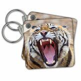 3dRose Royal Bengal Tiger, Ranthambhor National Park, India-As10 Jra0274 Jagdeep Rajput Porte-clés, 6 cm, Multicolore (Varies)