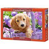 Castorland C-103799Puzzle 1000PC-Chiot dans Un Panier