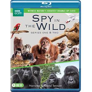 Spirit Entertainment Spy in the Wild: Series 1-2