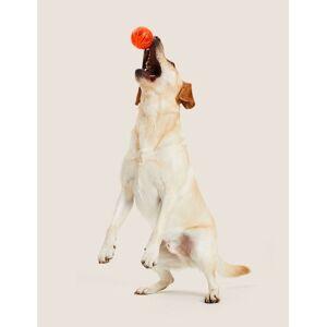 Marks & Spencer Light Up Ball Pet Toy - Orange  - unisex - Orange