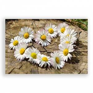 Big Box Art Poster Print Wall Art Flower White Daisy Heart Chain (3)   Home Decor for Kitchen, Living, Lounge, Dining Room, Bedroom, Office, Multi-Colour, A3 (42 x 29.7cm / 16.5 x 11.7 Inch)