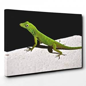 Big Box Art Canvas Print Wall Art Lizard Reptile (1)   Mounted and Stretched Box Frame Picture   Home Decor for Kitchen, Living, Dining Room, Bedroom, Hallway, Multi-Colour, 20x14 Inch