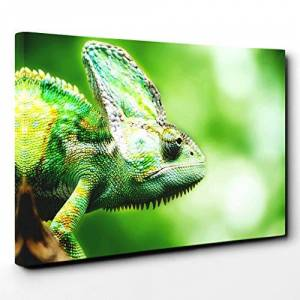 Big Box Art Canvas Print Wall Art Chameleon Lizard (1)   Mounted and Stretched Box Frame Picture   Home Decor for Kitchen, Living, Dining Room, Bedroom, Hallway, Multi-Colour, 30x20 Inch