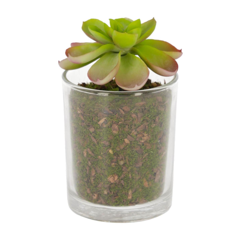 kave home piante artificiale aeonio