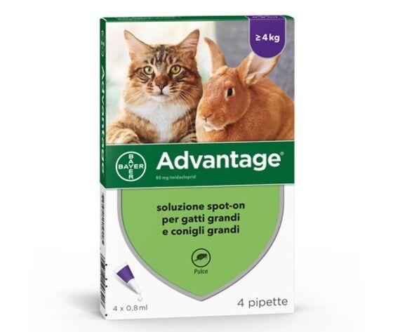 Bayer Advantage Spot-On Per Gatti, Conigli E Furetti Oltre 4 Kg