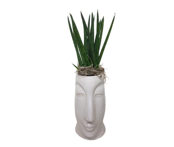 la mimosa vaso d'arredo in ceramica bianca con pianta grassa vera di sansevieria.