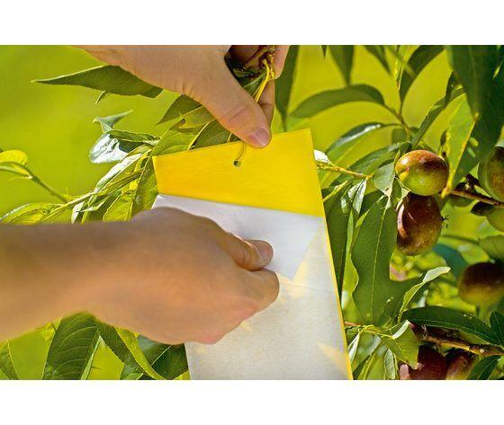 stocker insect trappola adesiva