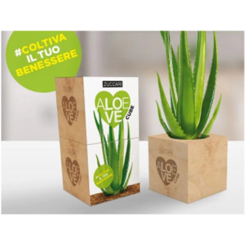 zuccari Aloe Love Cube
