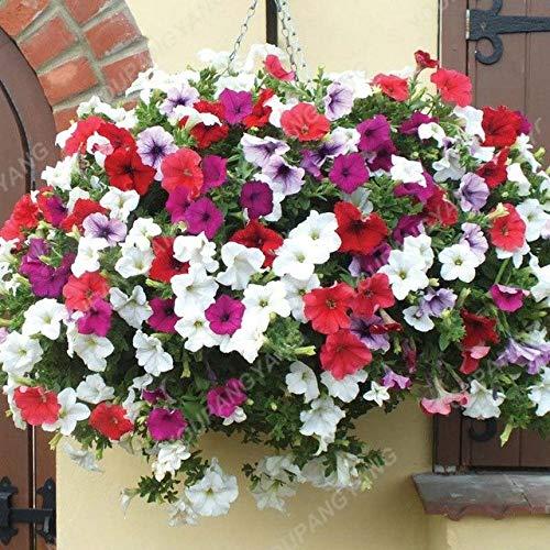 Elitely - Confezione da 45 semi di petunia da giardino, per interni e interni, per fai da te, da casa, giardino, cesti e contenitori, colore: giallo chiaro