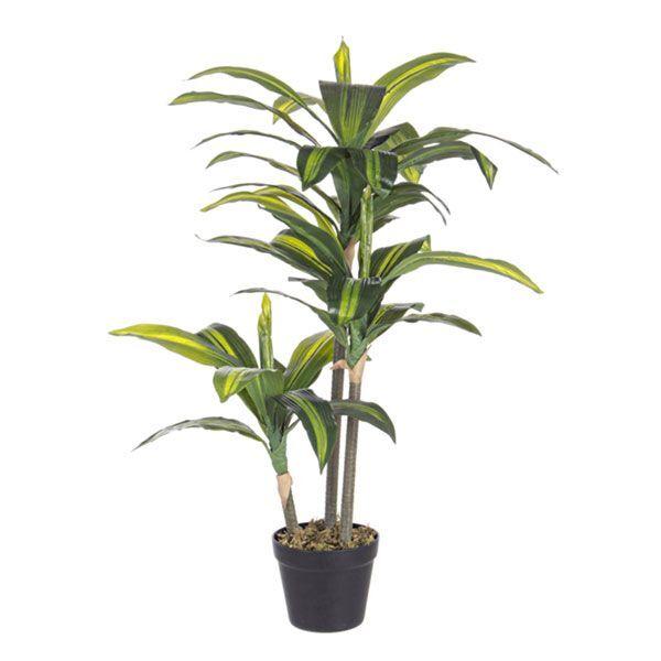 bizzotto pianta dracanea c-vaso 43 foglie h88 0172431