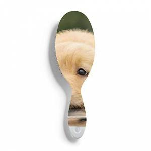PRAHUCE Cepillo de pelo húmedo para perros perritos perezosos, cepillo para el pelo del cuero cabelludo, cepillo para desenredar todo tipo de cabello, para mujeres, hombres, cabello húmedo y seco