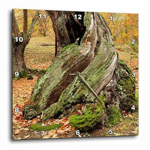 3dRose LLC 3dRose DPP_46076_2 Sweet Chestnut Tree Trunk Castanea Sativa-Wall Clock, 13 by 13-Inch