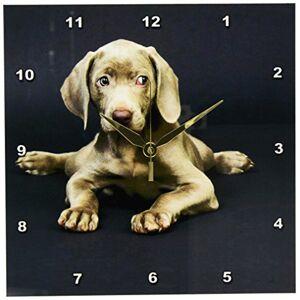 3dRose Weimaraner Cachorro Reloj de Pared, 10por 25.4cm