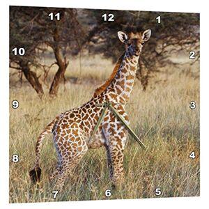 3dRose Kenia, Maasai Mara National Reserve, bebé Maasai Jirafa.Reloj de Pared, 15por 38.1cm (DPP 205383_ 3)