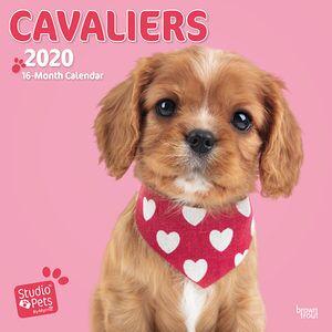 Studio Pets by Myrna Studio Pets Cavalier Kalender 2020