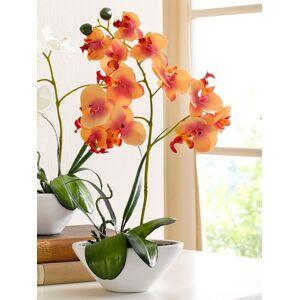KLiNGEL Phalaenopsis KLiNGEL Oranje