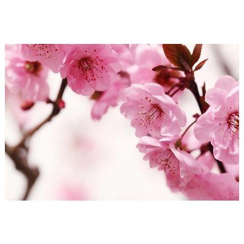 Home affaire fotobehang »Peach Blossom«  - 88.99 - roze