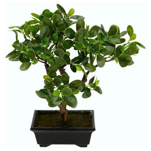 I.GE.A. kunstbonsai »Ginseng-Bonsai«  - 37.99 - groen