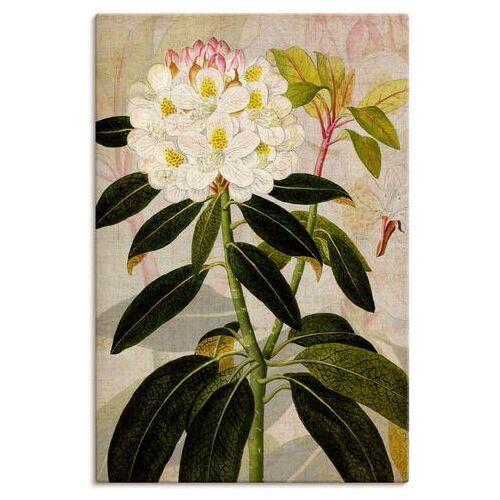 Artland artprint Rododendron I in vele afmetingen & productsoorten - artprint van aluminium / artprint voor buiten, artprint op linnen, poster, muursticker / wandfolie ook geschikt voor de badkamer (1 stuk)  - 88.99 - groen