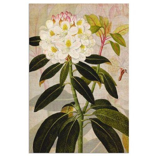 Artland artprint Rododendron I in vele afmetingen & productsoorten - artprint van aluminium / artprint voor buiten, artprint op linnen, poster, muursticker / wandfolie ook geschikt voor de badkamer (1 stuk)  - 54.99 - groen