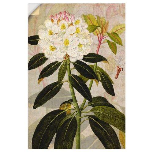 Artland artprint Rododendron I in vele afmetingen & productsoorten - artprint van aluminium / artprint voor buiten, artprint op linnen, poster, muursticker / wandfolie ook geschikt voor de badkamer (1 stuk)  - 22.99 - groen