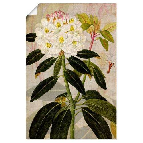 Artland artprint Rododendron I in vele afmetingen & productsoorten - artprint van aluminium / artprint voor buiten, artprint op linnen, poster, muursticker / wandfolie ook geschikt voor de badkamer (1 stuk)  - 23.99 - groen