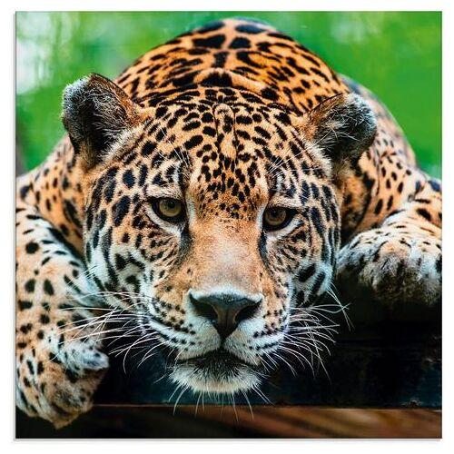 Artland print op glas Zuid-Amerikaanse jaguar (1 stuk)  - 65.99 - bruin