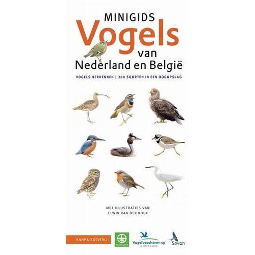 Set Minigids Vogels van Nederland en België - Jip Louwe Kooijmans (ISBN: 9789050117784)
