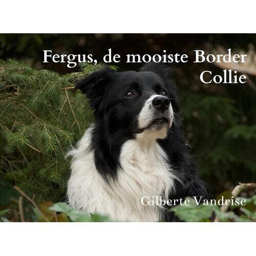 Fergus, de mooiste Border Collie - Gilberte Vandrise (ISBN: 9789464058383)