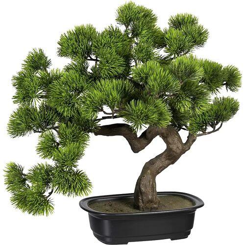 Bonsai den, in een kunststof schaal