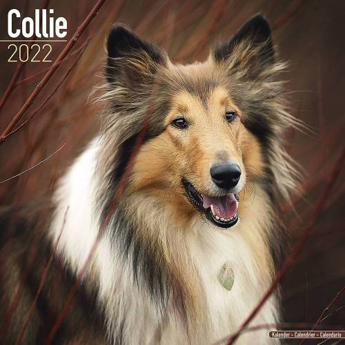 Kalender 2021 Collie