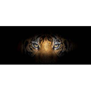 Boschbedding Schilderij op glas ogen tijger