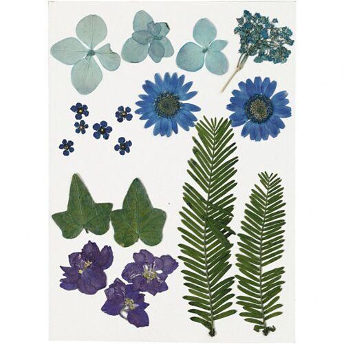 Creotime gedroogde blauwe bloemen en bladeren 19 stuks multicolor - Multicolor