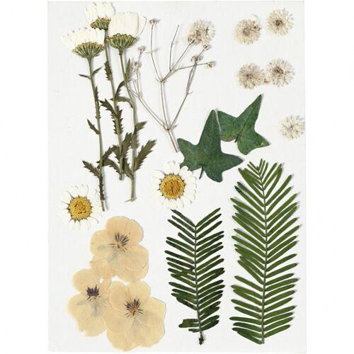 Creotime gedroogde gele bloemen en bladeren 19 stuks multicolor - Multicolor