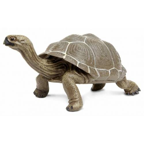 Safari speeldier Galapagos schildpad 22,5 cm bruin - Bruin