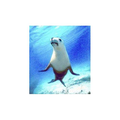 Animal Essences Seal (zeehond) (30 ml)