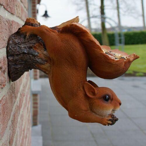Eekhoorn wandvoederschaal