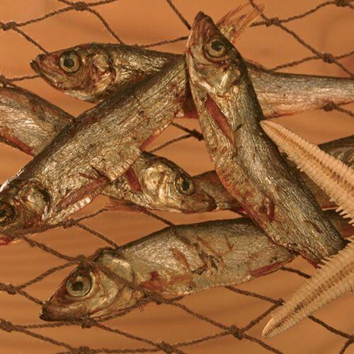 alsa-nature Oostzee haring - -