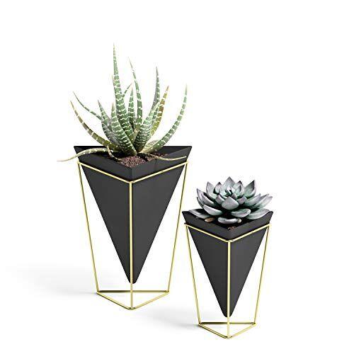 Umbra Trigg Planten- en wandvaas voor kamerplanten, vetplanten, luchtplanten, cactussen, kunstplanten en meer, set van 2